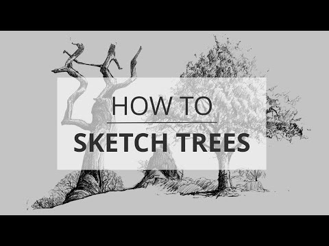 How to Sketch & Draw Trees