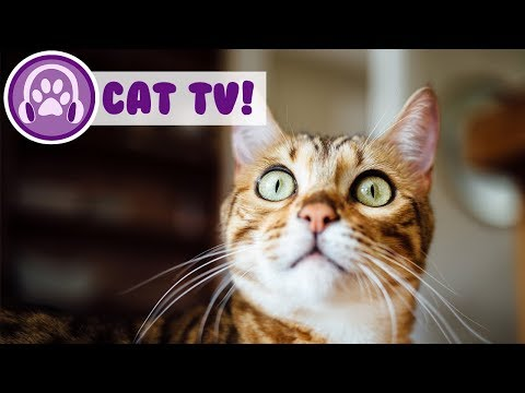 TV For Cats: How to Take Care Of A Cat? This is the Perfect Music and TV For a New and Kitten Owner!