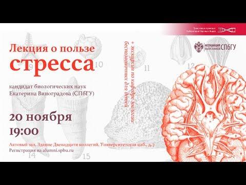 О пользе стресса. Екатерина Виноградова.