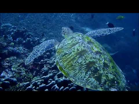 turtle (...footage by Johannes Nikolaus May)