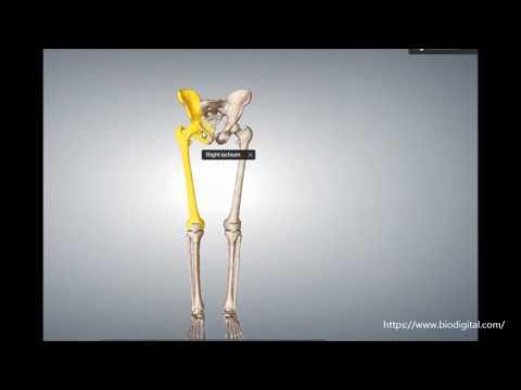 Rosenthal Paste Osteochondrose