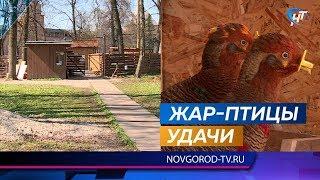 У новгородского Соколиного двора появились собственные жар-птицы