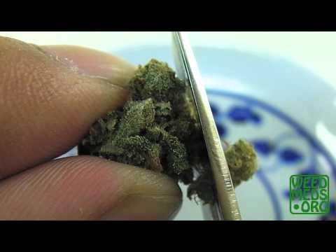 G-80 strain from San Diego Herbal Alternatives