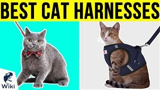 10 Best Cat Harnesses 2019