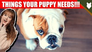THINGS YOU'LL NEED FOR YOUR ENGLISH BULLDOG PUPPY