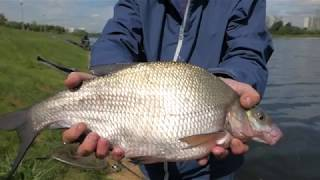Рыбалка в марьино на москве реке