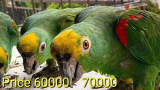 Exotic Birds Price In Pakistan  - Parrot Price List - Birds Price Update 2020