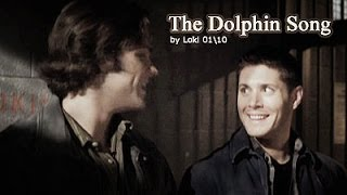 J2 // Dolphin Song