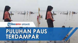 49 Ekor Paus Terdampar di Pantai Modung Madura, Nelayan: Baru Pertama Terjadi, Datangnya Bergerombol