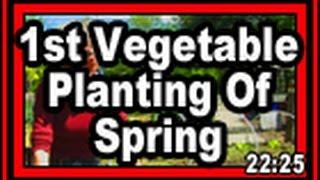 First Vegetable Planting Of Spring - Wisconsin Garden Video Blog 595