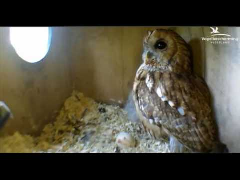 Female Hides in Nest Box - 10.04.17