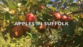 Apple Varieties UK