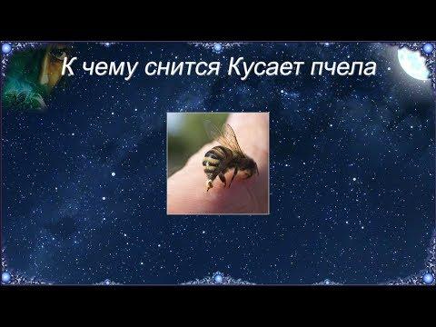К чему снится Кусает пчела (Сонник)