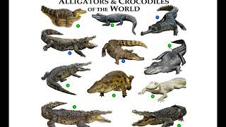 alligators and crocodiles of the world, types of crocodiles, game run