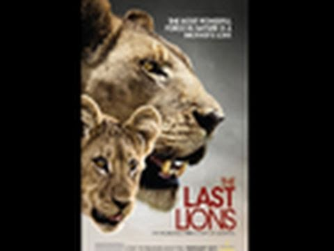 The Last Lions | National Geographic