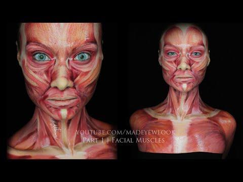 Les os du muscle du crâne