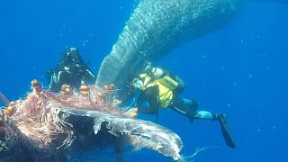 video: Watch: Italian coastguard frees whale trapped in fishing net