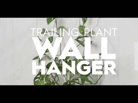 Trailing Plant Wall Hanger | Made By Me Garden | Better Homes & Gardens