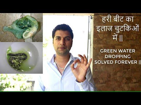 , title : 'GREEN BEAT PROBLEM IN PIGEON'S    हरी बीट का इलाज चुटकिओं में   