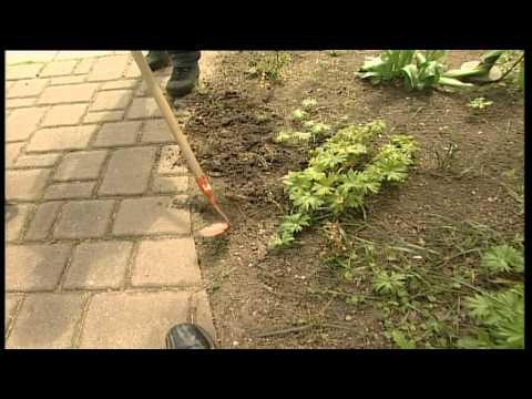 Gartentipps: lästiges Unkraut verbannen