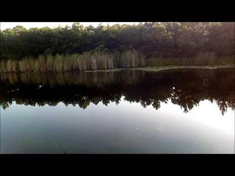 Small pond bass fishing. Topwater Popper and crank baits.