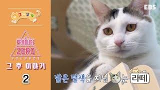 고양이를 부탁해 - 프로듀스 제로(유기묘 입양 프로젝트) - 그 후 이야기_#002