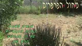 ריקוד הפרפרים בגינת התבלינים(1 סרטונים)