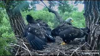 Decorah Eagles~Mad Scramble-D36 Takes The Fishes-Down the Hatch_6.30.20