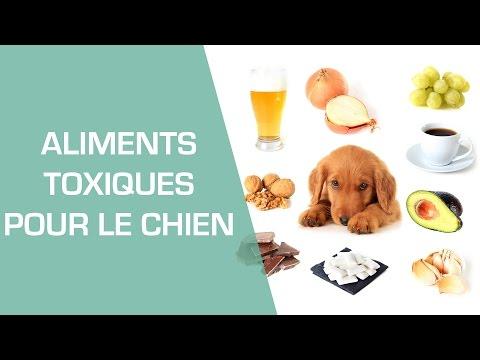 Les aliments toxiques pour le chien - Animaux