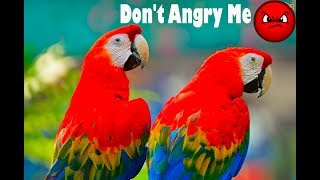 Scarlet Macaws Talking - Scarlet Macaw Sounds Don't Angry Me But Why?