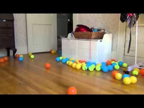 Неожиданный подарок на день Рождения собаки!