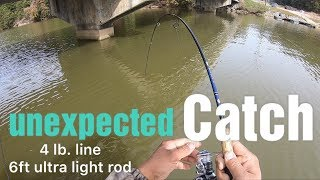 **Unexpected Catch** While Crappie Fishing