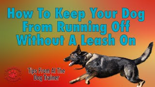 How To Keep Your Dog From Running Off When The Leash Isn't On - Tips From Al The Dog Trainer