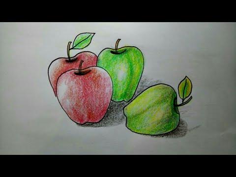 Mewarnai Buah Apel Dengan Crayon Download Gambar Mewarnai Gratis