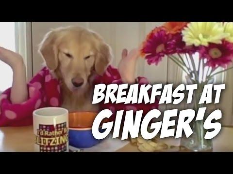 Το σκυλί παίρνει πρωινό, χαχα, δείτε!