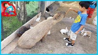 น้องบีม | ให้อาหารหนูยักษ์ เที่ยวราชบุรี มาลัยฟาร์ม
