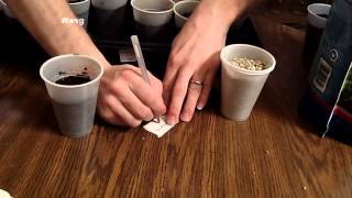 Starting Tomato Seeds and Using Vermiculite The Wisconsin Vegetable Gardener Extra 37