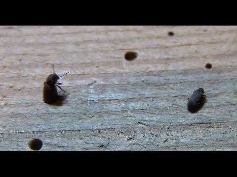 Dass die Parasiten und die Würmer im Organismus nicht mögen
