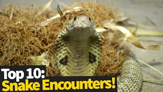 animale intalnire cu serpi periculosi