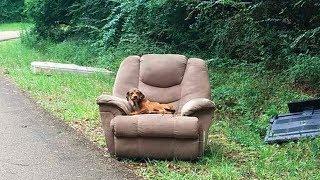 Оставленный в кресле, пёсик до последнего верил, что хозяин вернется...