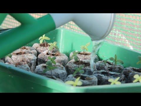 ¿Cómo y dónde PLANTAR MARIHUANA de EXTERIOR? Condiciones de cultivo de cannabis TOP CULTIVO 09