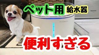 💖 最新のペット用給水器が便利すぎる【かわいい】【犬】【chihuahua】【dog】【給水器】
