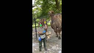 Zoo to You: Happy World Camel Day