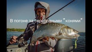 В поисках жереха. Рыбинка и Волга.