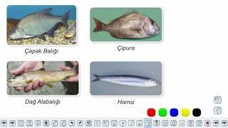 Eğitim Vadisi 9.Sınıf Biyoloji 17.Föy Omurgalı Hayvanlar Konu Anlatım Videoları