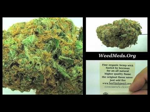 SDHA Cheese Strain (Medical Marijuana)