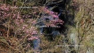 春の小中大滝