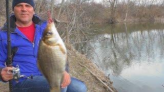 Когда весной можно начинать рыбалку на карася