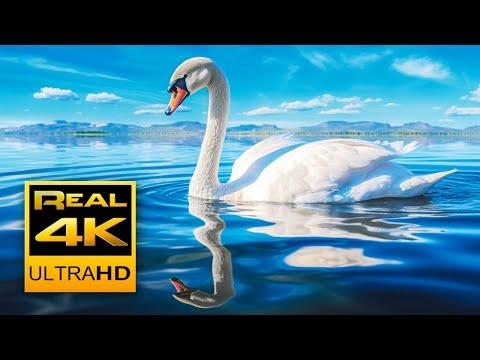 Balu - Relaxing Nature in 4K YouTube videos - Vidpler com