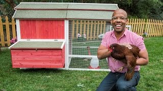 How To Make A Backyard Chicken Coop
